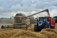 New Holland CX7080 Combine Harvester unloading Winter Barley to a Lynch Grain trailer drawn by a New Holland T6070 Tractor (Shane Casey CK25) Tags: new holland cx7080 combine harvester unloading winter barley lynch grain trailer drawn t6070 tractor cnh nh casenewholland newholland harvest grain2017 grain17 harvest2017 harvest17 corn2017 corn crop tillage crops cereal cereals golden straw dust chaff county cork ireland irish farm farmer farming agri agriculture contractor field ground soil earth work working horse power horsepower hp pull pulling cut cutting knife blade blades machine machinery collect collecting mähdrescher cosechadora moissonneusebatteuse kombajny zbożowe kombajn maaidorser mietitrebbia nikon d7100