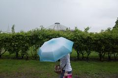. (_ИГ) Tags: ds2 rain umbrella 20 plusa