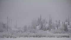 Snowing on Rat Lake (Camusi) Tags: canada nwt northwestterritories northof60 nord north territoiresdunordouest tno yellowknife winter snow neige white blanc hoarfrost frima geléeblanche gelée trees arbres ghosttrees december decembre ratlake neighborhood quartier home maison canon eos 60d