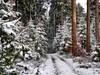 Winterwald (almresi1) Tags: winter wood forest wald way weg snow schnee tannen trees nature landscape landschaft alb böhmenkirch germany whitesnow