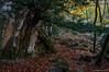 El árbol y la roca (SantiMB.Photos) Tags: 2blog 2tumblr 2ig fotohiking urederra nacederodelurederra urbasa río river otoño autumn árbol tree geo:lat=4280396041 geo:lon=213475398 geotagged baquedano navarra españa esp