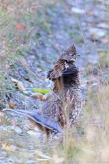 Automne Chasse Mont-Louis (rejeanjdeschenes) Tags: automne chasse montlouis