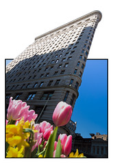 April in New York (Michel Couprie) Tags: usa nyc newyork city composition outofbounds oob oof sunny tulip flower fleur frame architecture building flatiron canon eos 7d couprie wideangle sigma 1020mm