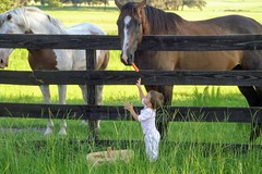 A person is a person, no matter how small. (angelinavukel) Tags: angelinavukel horses fences fencefriday feeding toodler feedinghorses carrots basket nature outdoors pointofuphotography hff