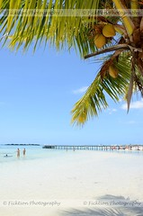 The Beaches of Moorea (ficktionphotography) Tags: moorea frenchpolynesia island beach coconuts palmtrees sand