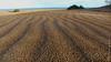 después de la lluvia (marianodearriba) Tags: safaric marianodearriba claromeco playa dunas médanos tamariscos paz natuaraleza paisaje mar