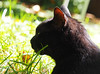 Kocio (arjuna_zbycho) Tags: blackcat tuxedo tuxedocat kater hauskatze cat animal cute animals pets gato kitten feline kitty kittens pet tier haustier katzen gattini gatto chat cats kocio