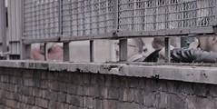 Cultura proibita (Colombaie) Tags: omogirando visita guidata visite guidate gay friendly turismo lgbt roma omosessuali omosessuale lesbica lesbiche eterosessuali assieme insieme gruppo amici scoprire cultura quartiere esquilino rione passeggiare piacere scoperta arte tempolibero archeologia integrazione sepolcri repubblicani via statilia chiuso cancellata