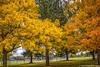 Oh, That Autumn (jimgspokane) Tags: autumn fall trees leaves parks spokanewashingtonstate otw