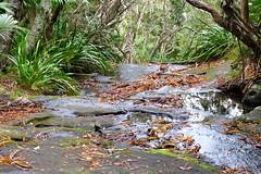 LHID 179 (newnumenor) Tags: australia lordhoweisland nsw