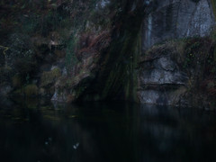 (VampireBassist) Tags: cornwall falmouth mabe mabeburnthouse landscape nature wood trees quarry