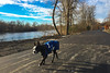 Rideau river trail got paved overnight and Bully is investigating it for the first time :-) (lezumbalaberenjena) Tags: bully dog perro chien chiot boston terrier 2017 river rideau rio ottawa lezumbalaberenjena