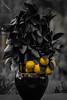 lemons (tersha53) Tags: 52weeks2017 selectivecolour wk48 lemons sundaylights fvf