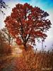 file51133 (Firefly Ju) Tags: atumn tree red sky
