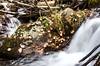 Solitude (catmccray) Tags: stream westchicagocreekcampground mountainstream coloradomountains fall autumn aspenleaves