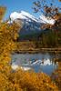 Picture Frame (Tim Gupta) Tags: banff banffnationalpark fall fallfoliage fallcolors leafpeeping vermilionlakes