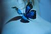 she makes me wanna fly (thewhitestdogalive) Tags: fun portrait butterfly back nude nudism sensual sexy girl beauty bokeh blur outfocused blue riccardobandieracom riccardobandieraphotography