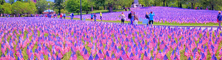 Boston Common Flag Garden, Memorial Day