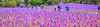 Boston Common Flag Garden, Memorial Day (brooksbos) Tags: brooks brooksbos boston bostoncommon flags flaggarden memorialday sony rx100 rx100m2 cybershot patriotism patriots america usa