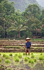 Tinh Ha Giang 009 (Phytophot) Tags: hanoi roadtrip china paddyfields village hills