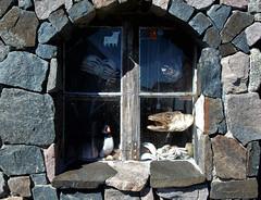 shop window (atsjebosma) Tags: stone window raam fish bird crab schelpen atsjebosma hennisvaer lofoten norway noorwegen 2017 hww wednesday woensdag