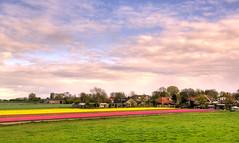 A flower field as your back yard. (Alex-de-Haas) Tags: oogvoornoordholland 1635mm d750 dutch europe hdr holland nederland nederlands nikkor nikon noordholland thenetherlands westfrisia westfriesland westfrieseomringdijk clouds landscape landschap lucht nature natuur skies sky tulip tulipfields tulipa tulips tulp tulpen tulpenvelden wolken