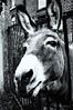 2017-07-09-Ligney-58-2 (Pontalain) Tags: ligney ane borrico donkey esel