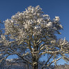Dunlichity Tree (prajpix) Tags: tree snow hills invernessshire highlands scotland winter sky blue