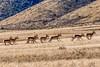 2017 Winners BLM & TravelNevada Photo Contest (BLM Nevada) Tags: yourpubliclands wildlife blmwild homemeansnevada silverstate foothills mountains antelope nativeplantsnevada sagebrush photocontest mountans vacation hiking