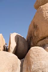 Joshua Tree (bombeeney) Tags: joshuatreenationalpark ma mojavedesert california