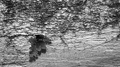 DSC07425 (O KDUKO) Tags: araraquara blackandwhite blackandwhitephotography pictureoftheday blackandwhitephoto photography bnwcaptures monochrome monochromatic instablackandwhite monoart instabw bw bwstylesgf artgallery visualart bwphotooftheday photoshoot bwstyleoftheday aesthetics streetphotography arts