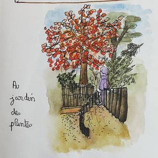 Couleurs d'automne. Croquis réalisés au jardin des plantes de Rouen.