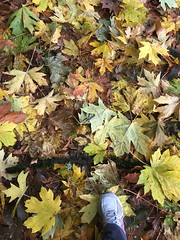 317/365: Leaves Underfoot