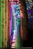Rainbow Bridge (DMeadows) Tags: dmeadows davidmeadows davidameadows enchanted forest light night lights lit wood woodland event scotland water colour faskally forestry commission walk color reflection pitlochry perthshire tree trees oir an uisge show 2017 lighting illuminations illumination illuminated illuminate tamronspaf90mmf28dimacro tamronspaf90mmf28divcusdmacro
