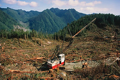 B8CDGD (boss5609) Tags: deforestation temperate rainforest tree trees plant plants rainforests forest forests wood woods woodland woodlands deforest machinery industry logging logged cut clear clearing cleared fell felled felling habitat loss destroy destruction deforested canada canadian
