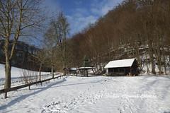 1502Quelle098 (Stefan Heinrich Ehbrecht) Tags: quelle kraftort buch wald selva forest foret buche fagus buchen buchenwald