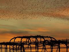 DSCN4803 (loolabub) Tags: murmuration brighton beach sunset southcoast brightonpier starlings seabirds