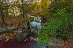 1338__0627FLOP (davidben33) Tags: brooklyn 718 ny quotnew yorkquot quotprospect parkquot autumn 2017 fall trees bushes leaves lake pets gooses ducks water sky clouds colors yellow green blue people quotstreet photosquot