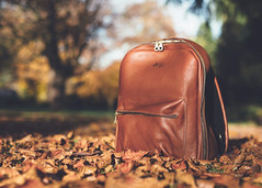 New camera bag (V Photography and Art) Tags: leather camerabag rucsac tanleather leaves sunshine autumn woodlandfloor perspective pov tan trees sky figbags