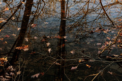 Peaceful (Millie Cruz) Tags: thanksgiving peaceful leaves autumn water canal wildwoodpark harrisburgpennsylvania reflections trees tow path trail wildwoodlake