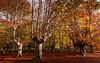 Atardecer (juan luis olaeta) Tags: paisajes landscape autumn otoño udazkena colores natura naturaleza canon canoneos60d photoshop lightroom sigma1020 zuia