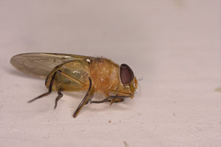 Fly IMG_2189
