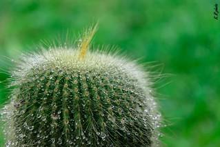 #nature#green#nettuno#plant#crunchplant#plant#rain#garden#photograpy#myphoto#circle