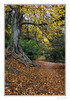 Tree in The Dene (Seven_Wishes) Tags: newcastleupontyne outdoor photoborder jo canoneos5dmarkiv canonef24105mmf4lisii jesmonddene autumn autumnal woodland wood tree rustic leaves roots leafypath plant forest park trail 2017 edoliverphotography views8k