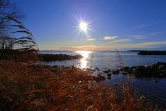 Beautiful day (annemwo) Tags: seaside water coast sun serene shore nature november tønsberg norway