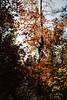 IMG_5636 (schnabelsayegh) Tags: redrock sedona arizona hiking views landscape photography rivers mountains trails leafs fall october screensavers