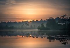 Banners of nature (Ingeborg Ruyken) Tags: dropbox autumn zonsopkomst sunrise dawn oisterwijksevennen fall flickr herfst ochtend trees rayoflight 2017 bomen oktober 500pxs natuurfotografie fog morning october mist