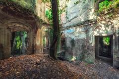 Wooden heart (Photonirik) Tags: vert urbex decay urban exploration oblivion abandoned abandonné oubli forgotten ue dust