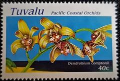 Dendrobium comptonii (Sylvio-Orquídeas) Tags: orquídeas orchids orchidaceae espécies species flores flowers selos stamps tuvalu dendrobium comptonii gracilicaule