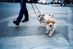 (anthonyfrankpeter) Tags: cine still cinestill film 35mm olympus stylus epic mju ii wicker park chicago dogs